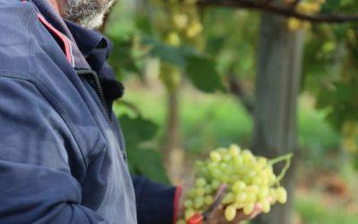 🍇Du raisin pour une rentrée sans pépins